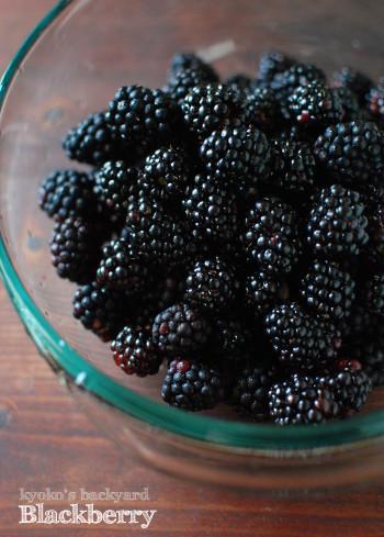 ブラックベリーの収穫と、ジャム作り_b0253205_02112203.jpg