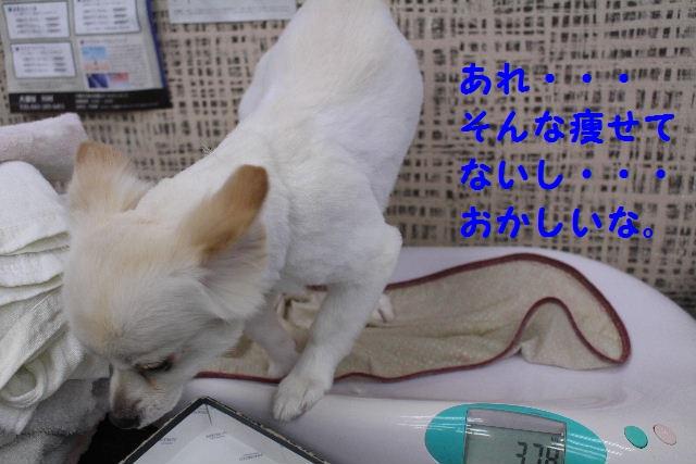 b0130018_21415967.jpg