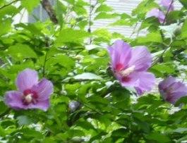 7月、大垣にて_f0197754_0272783.jpg