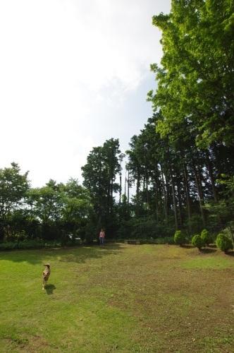 【桃旅 #004】愛犬とのんびり過ごせる宿@プチホテル マイカ 伊豆高原_c0364176_20501841.jpg