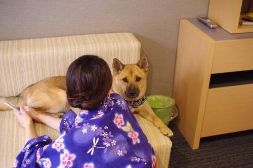【桃旅 #004】愛犬とのんびり過ごせる宿@プチホテル マイカ 伊豆高原_c0364176_20552982.jpg