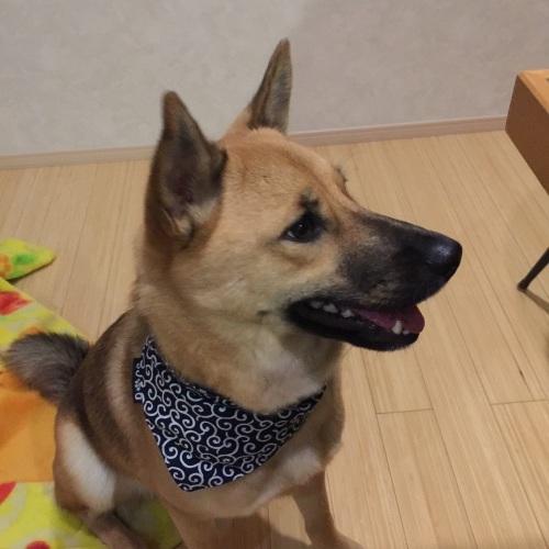 【桃旅 #004】愛犬とのんびり過ごせる宿@プチホテル マイカ 伊豆高原_c0364176_21072967.jpg