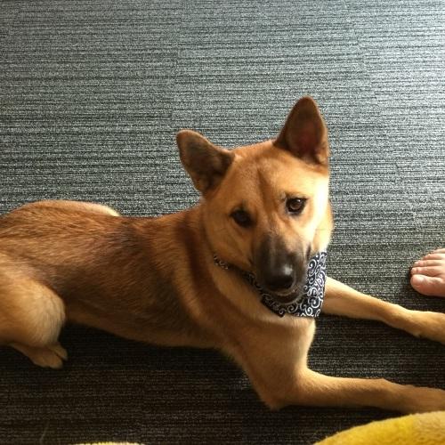 【桃旅 #004】愛犬とのんびり過ごせる宿@プチホテル マイカ 伊豆高原_c0364176_21205560.jpg