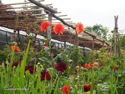 Petersham Nurseriesの紫陽花とダリア_f0238789_19435568.jpg