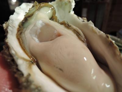 仙鳳趾の牡蠣 解禁_f0157910_15380545.jpg