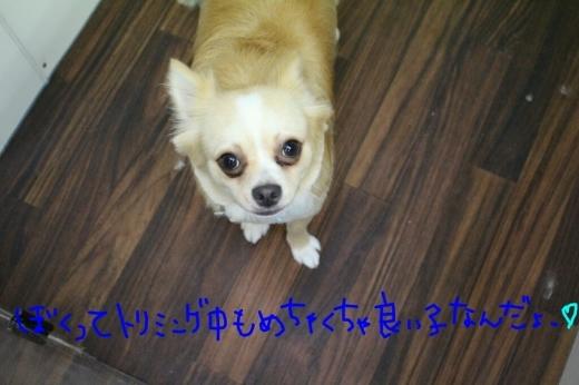 b0130018_01033123.jpg
