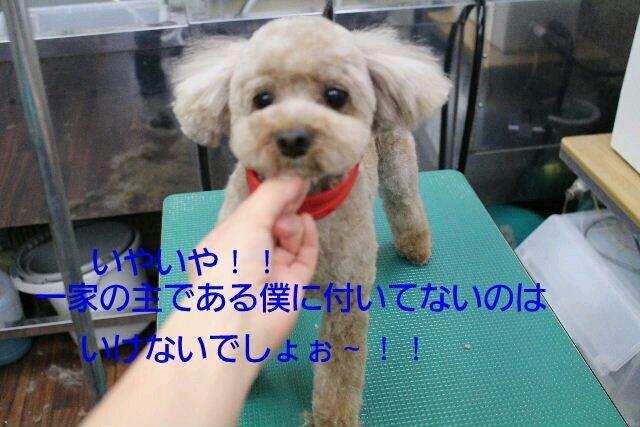 b0130018_15301163.jpg