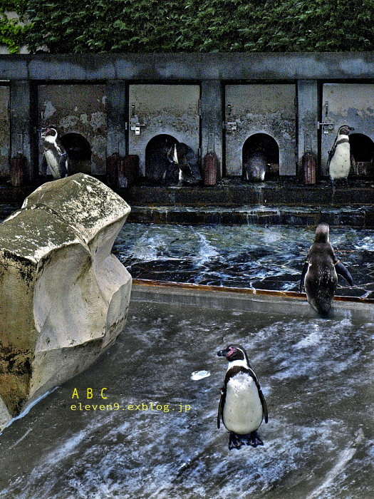 Penguin & Flamingo_f0315034_14251136.jpg