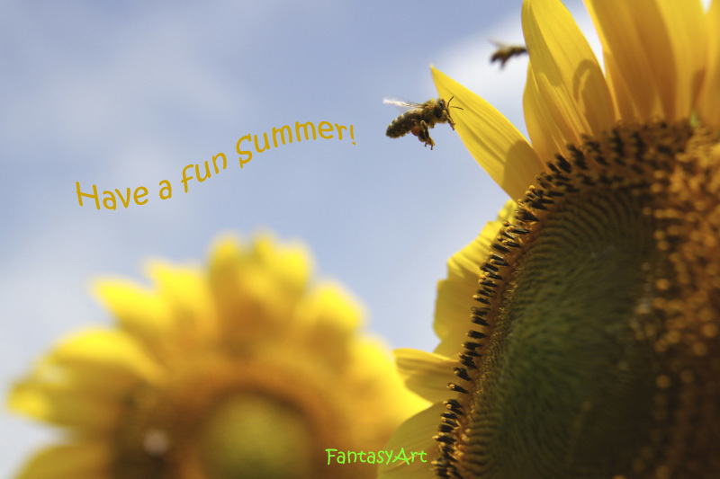暑中お見舞い申し上げます。_f0281446_20555572.jpg