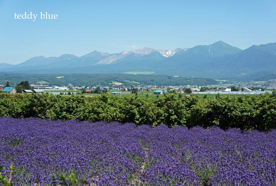 Hokkaido trip, Summer of 2015  北海道旅行 富良野_e0253364_1343026.jpg