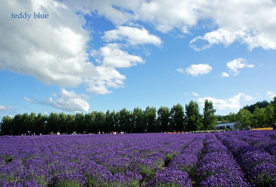 Hokkaido trip, Summer of 2015  北海道旅行 富良野_e0253364_1355455.jpg