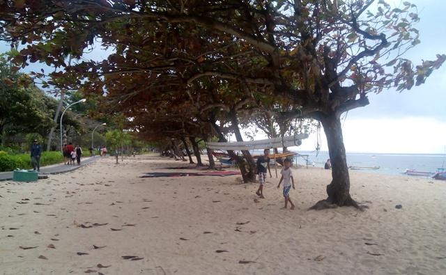 サヌールの海辺にある木(その1)_d0083068_10164127.jpg