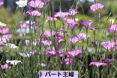 六甲山♪_e0340671_23050527.jpg