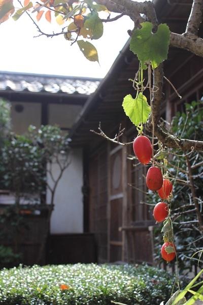 嵯峨野で_e0340671_23133703.jpg