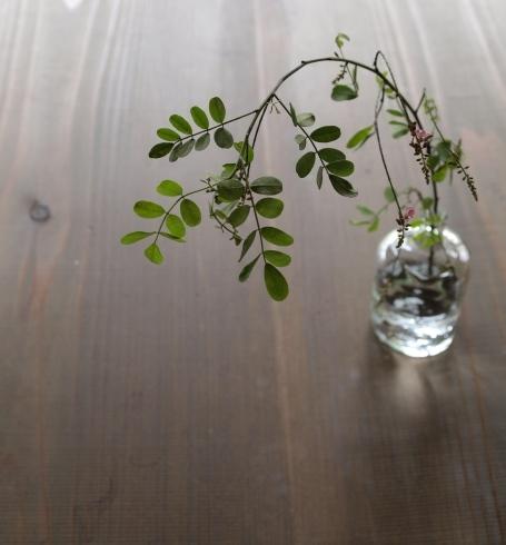 大澤英美さんの「山の花」_c0155980_00580642.jpg