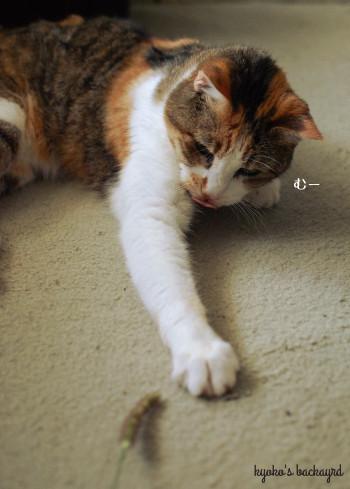 安上がりな猫のおもちゃ 2_b0253205_00592200.jpg