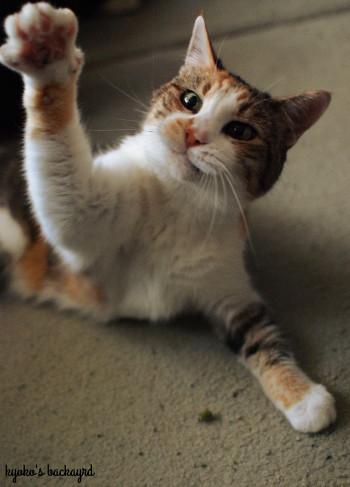 安上がりな猫のおもちゃ 2_b0253205_01003922.jpg