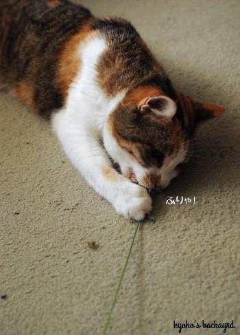 安上がりな猫のおもちゃ 2_b0253205_01012962.jpg