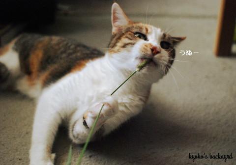 安上がりな猫のおもちゃ 2_b0253205_01025338.jpg