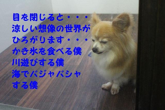 b0130018_8543685.jpg