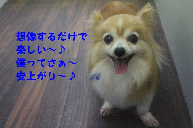 b0130018_8544776.jpg