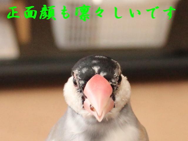 c0365734_15034056.jpg
