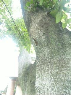 blog:広島、蝉の声_a0103940_12413518.jpg