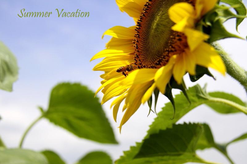 Summer Vacation_f0281446_22445999.jpg