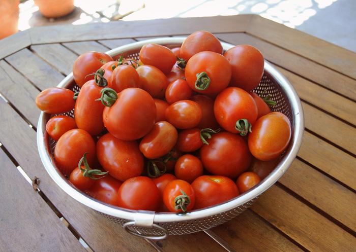 トマト天国 と 焼きラタトゥイユ_d0180447_11513254.jpg