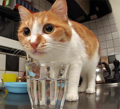 コップで水飲み2_a0028451_19553896.jpg