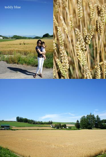 Hokkaido trip, Summer of 2015  北海道旅行 美瑛_e0253364_146229.jpg