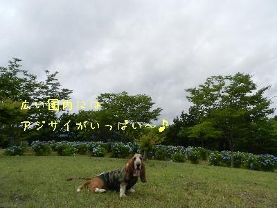 f0205887_15245692.jpg