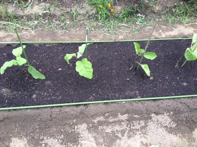次の夏野菜_f0204295_9301494.jpg