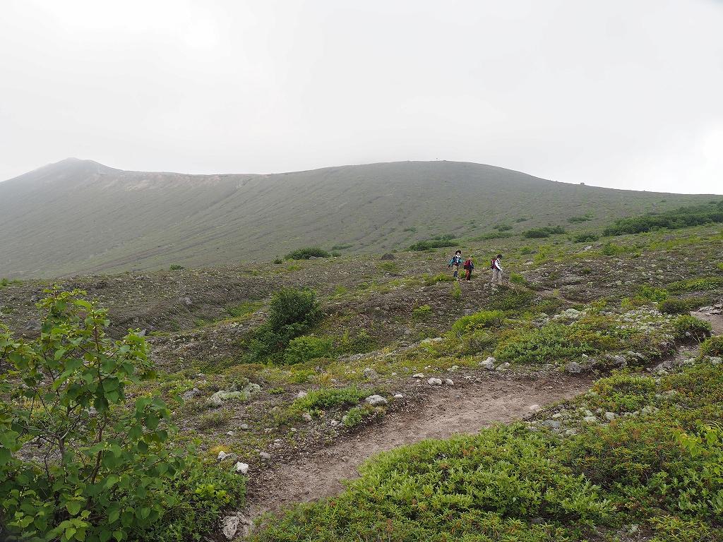 タルマエソウが最盛期の樽前山、7月20日-その2 -_f0138096_1752423.jpg