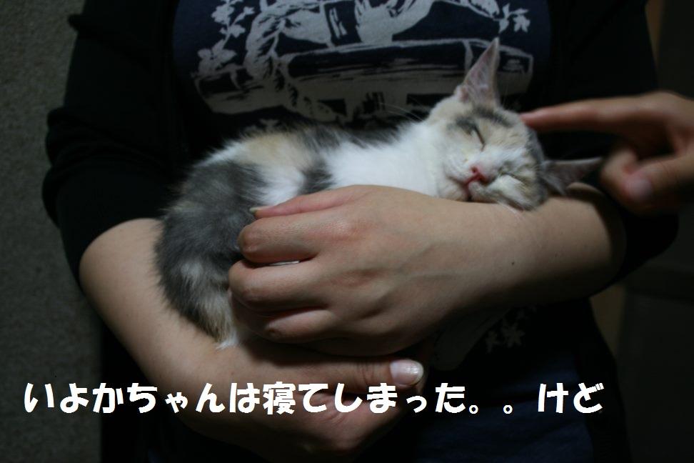 幸&モス&いよか&きんか 新生活スタート!_f0242002_11422173.jpg