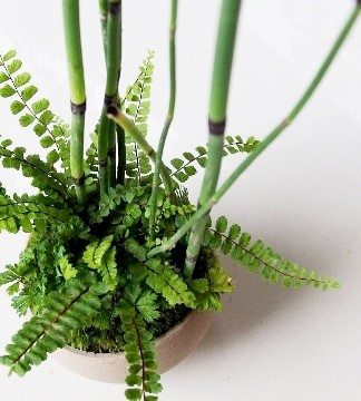 シダ植物の寄せ植え盆栽教室のご案内_d0263815_1432835.jpg
