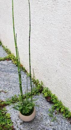 シダ植物の寄せ植え盆栽教室のご案内_d0263815_144034.jpg