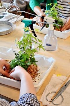 シダ植物の寄せ植え盆栽教室のご案内_d0263815_1492058.jpg