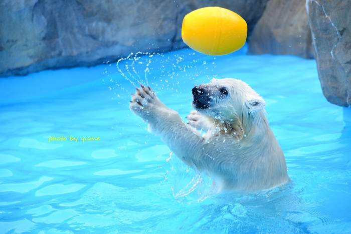 水遊び♪_a0322950_045679.jpg