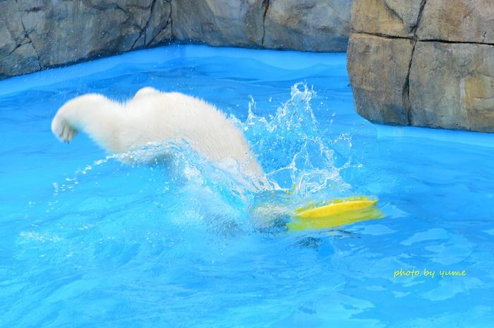 水遊び♪_a0322950_057891.jpg
