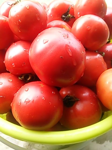トマトソース作ろう!!_e0081959_16382354.jpg