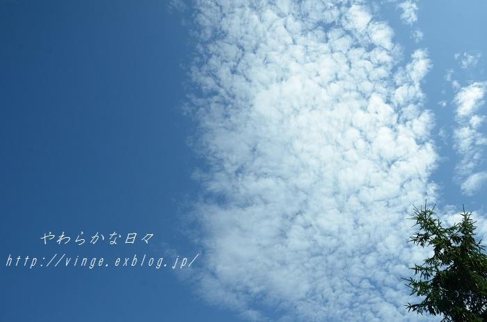 大暑 雑感_a0158478_14345583.jpg