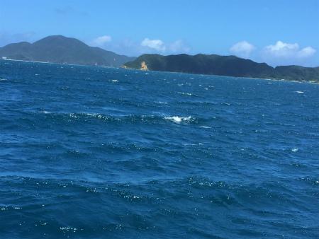 大島海峡、波立ってきたー。_e0028387_1455793.jpg