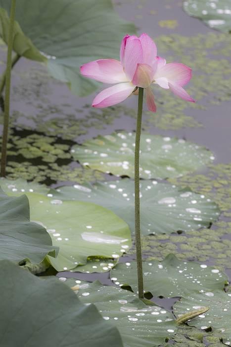 花の色は 移りにけりな ..._c0077395_11100886.jpg