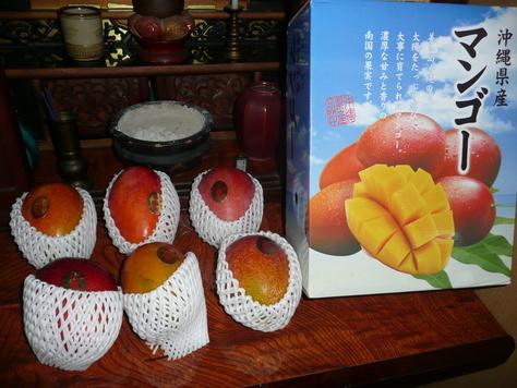 2015年7月29日 沖縄中学校同級生 金城幸栄君から中元にマンゴ その3_d0249595_1841581.jpg