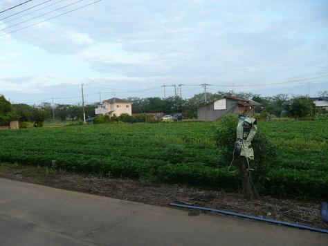 2015年7月29日 沖縄中学校同級生 金城幸栄君から中元にマンゴ その3_d0249595_18452151.jpg
