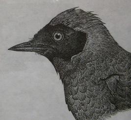 第2回 トリ・とり・鳥 展  開催中 その4_e0134502_1920524.jpg