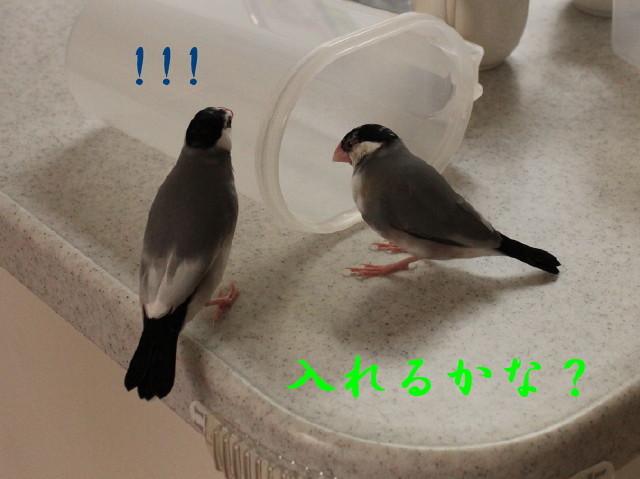 c0365734_20291218.jpg