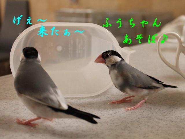 c0365734_20292111.jpg