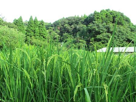 ニホントカゲ/変わりゆく農業_a0123836_1618065.jpg